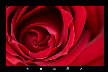 Red Rose on LED backlit LCD screen with GE TriGain phosphor